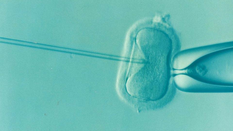 Reproducción asistida:El  bienestar de la maternidad y la paternidad